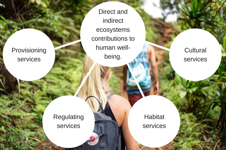 Direct and indirect ecosystems contributions to human well-being.